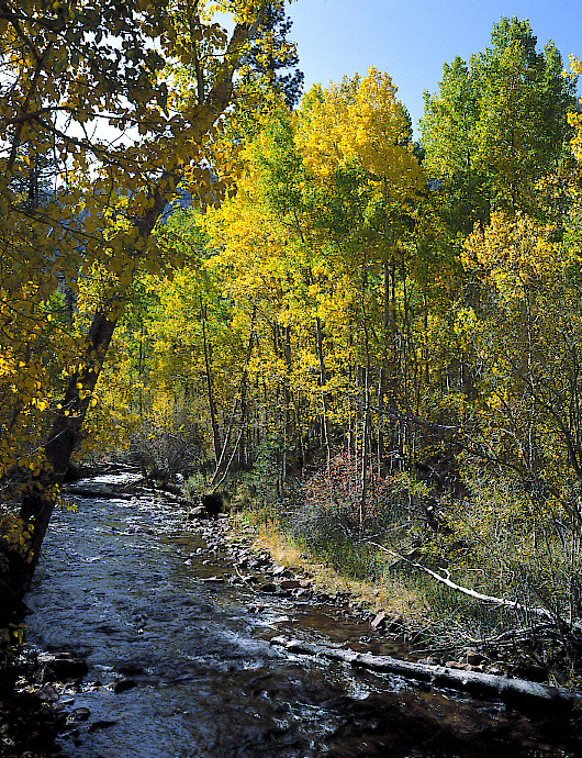 Lee Vining Creek and Aspen in the Fall --  Below Tioga Pass